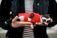 obsessed / Boston Terrier's, Chihuahua's and other precious fur babies.  / by Nadine