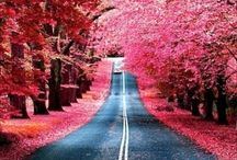 Roads / by Janna Jones