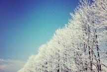Snow / by nagato kimura