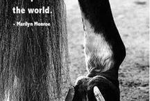 horse quotes / by Rowanna Pollock