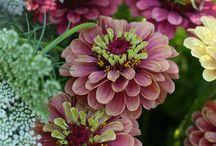 Summer/flowers / by Brenda Farr
