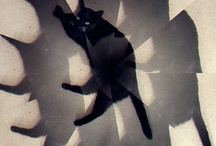 Black Cats / by Adrienne