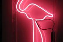 Flamingos / by carol Matthews