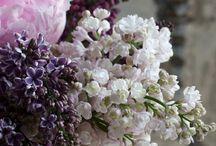 Flowers everywhere / by mamawolfe