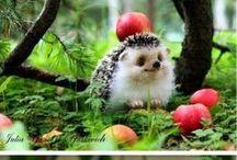 Hedgehogs Galore / by Kellie Recio