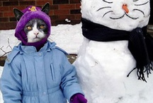 funny cats / by rita stevens