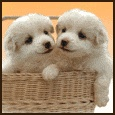 Pets / Pets are known to be wonderful friends.