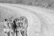 Animals / by Bianca Gantner
