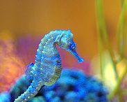 Ocean & Sea Life / by Karen Gould