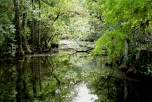 The Florida Everglades / by Donna Taylor