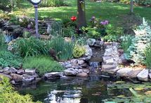pond ideas / by mary bertoni
