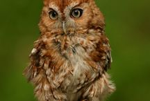 Wildlife / by Veterinary Center for Birds and Exotics