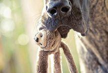 Critter Love!!! / by Maddi Ryan