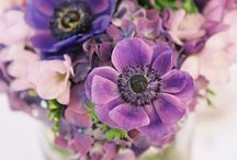Flores /Flowers / by Julia Alburquerque