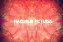 Marigold Pictures / Clicks, clicked, clickety-click. Pictures I take. / by Aasia Abbas