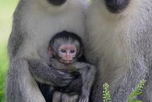 Monkies / by Effie Smith