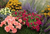 Gardening / by AboutFlowers