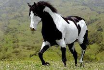 HORSES / by Debbie Reid