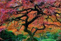 Trees / by Brenda Hawkins