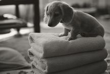 Doxie / by Jessica Betts