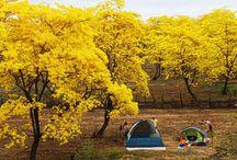 Florecimiento de #Guayacanes #Ecuador/Blossom of #Guayacanes #Ecuador / El Espectáculo Natural  de la provincia de #Loja cantón #Zapotillo / by ✈Visit Ecuador and its Galapagos Islands