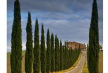 Toscane / by Saskia de Winter