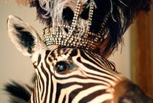 Animal + Style / Stylish creatures, great + small.  www.dressedupanddown.com / by Dressed Up + Down, LLC