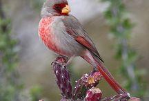 Birds / by Rebekah Meier