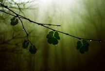 Irish and Scottish / Love Ireland. On my bucket list to go there. And I am a lot of Irish! / by Darlene Merkel