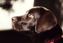Black Labs / by Colleen Rummell