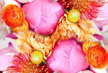 Color Inspiration / by Gossamer Blue