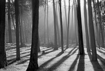 Nature / by Michel Luarasi