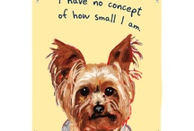 Tyson-Doggie Stuff / by Christie McIntosh-Sonnier