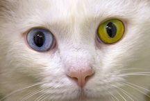 Cats / by Camilla Stockalper