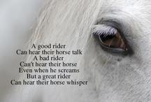Horses... / by Nancy D'Emilio