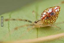 Bugs 'n Stuff / by Debbie Borgstadt
