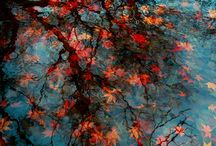 Fall / by Susan Reynolds