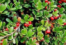 Ground Covers / by National Home Gardening Club