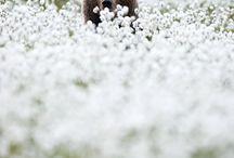 Sic 'Em Bears! / by Lydia Johnson