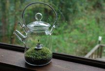 Tea Decor - Decorate with tea! / by Awkward Soul