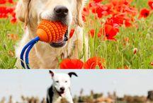 Puppy Love / by Ashley Rea