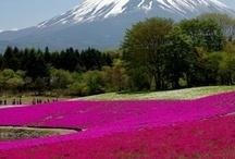 Let's visit  / by ICHI Sushi