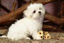 Adorable / by Nancy Wagner