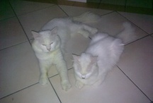 My Cats / by Merapi Indah
