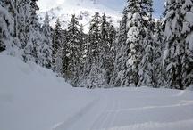 Skiing / by Hanna Torvi