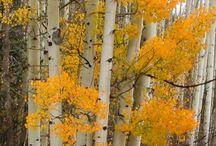 Fall love / by Janice Moehlman