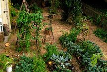 gardening / by Patti Mason