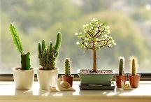 plants greens gardens / by Olga wassupbrothers