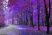 """Purple Majesty!! / """"Don't wait for old age to wear purple.  Be eccentric now!"""" / by Peggy Ottenheimer"""