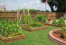 Gardening Ideas / by Monique Chilelli